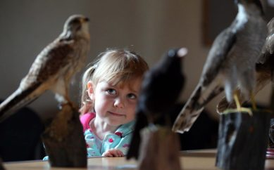 Autumn Wildlife Hunt, Ulster Folk & Transport Museum, Sunday 30 September