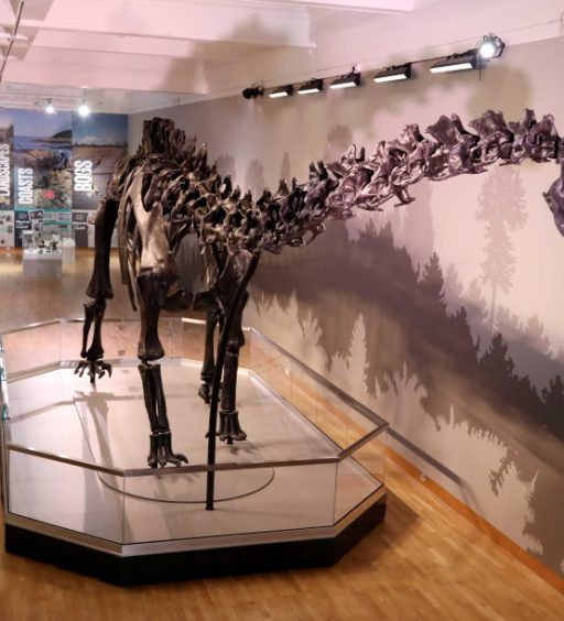 Crowds expected to flock to Ulster Museum to see UK's most famous dinosaur