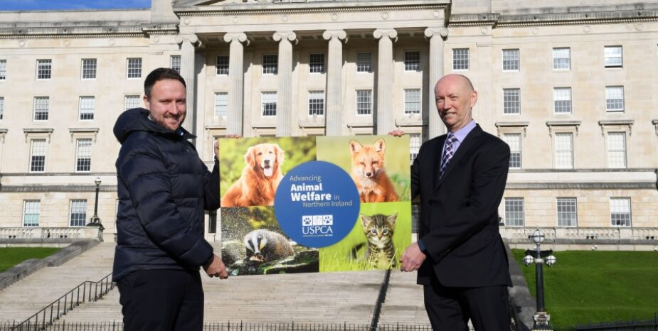Local MLAs Set to Address Animal Welfare Concerns at Stormont