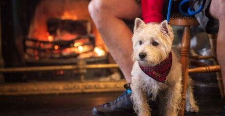 Northern Ireland destinations for you and your pooch