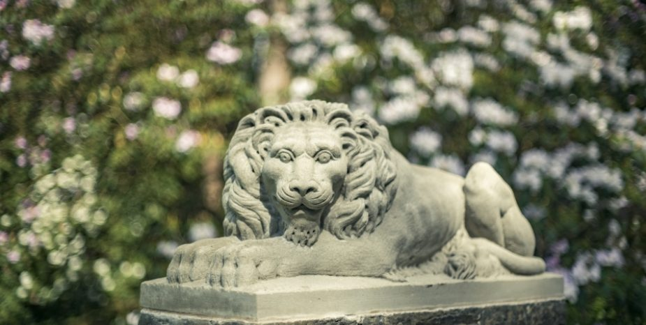 Rowallane Garden needs your help to name its new lions
